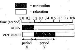 Which option best describes meter answers com