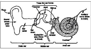 Human Ear and Applications of Sound Class 9 Notes | EduRev