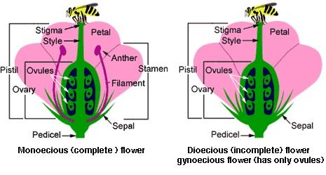 Anim Agriculture Technology: Monoecious and Dioecious Plants
